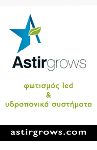 Astir Grows